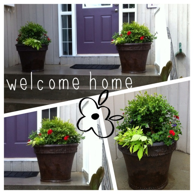Flowers and Planters