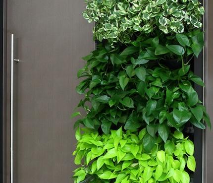 Plants Inside The Office