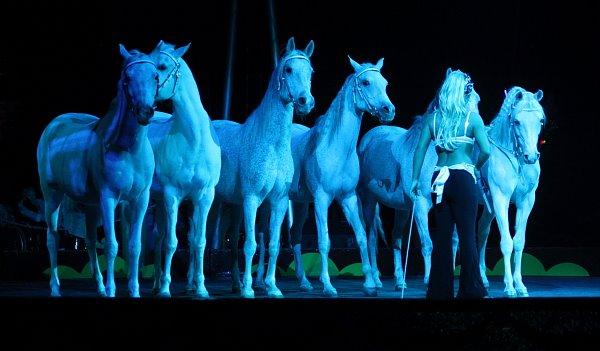 Horses - Erika Zerbini 4