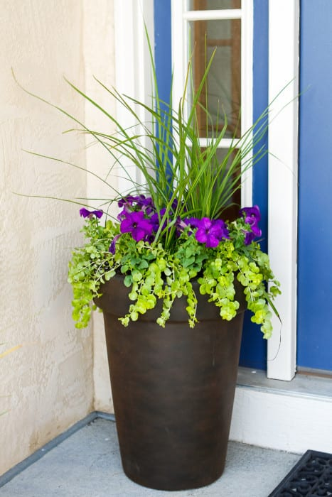 Gardening For Beginners - planter perfectly proportioned