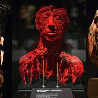Body Worlds Vital at Telus Spark